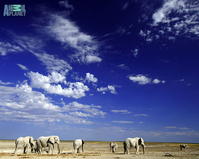 Wallpapers of Elephants