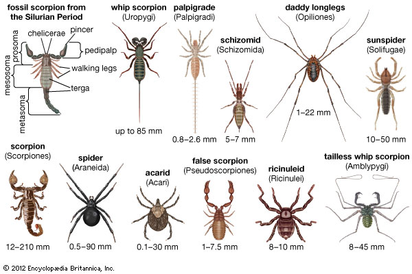 a report on different types of spiders A spider web, spiderweb, spider's web, or cobweb (from the archaic word coppe spiders use different gland types to produce different silks.
