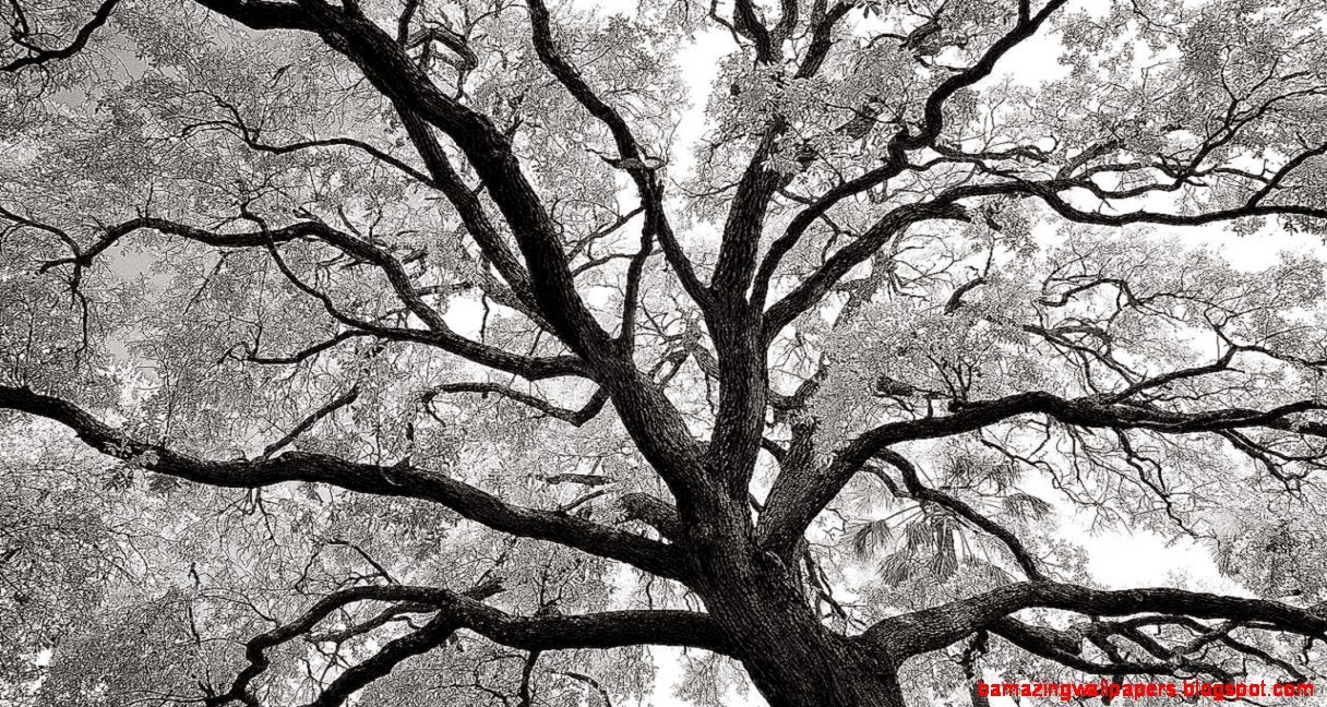 Abstract Tree Photography Widescreen 2 HD Wallpapers