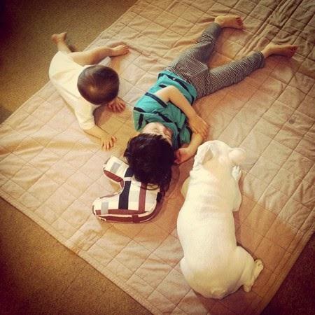 hewan peliharaan, anjing kesayangan, balita anjing, keakraban anjing