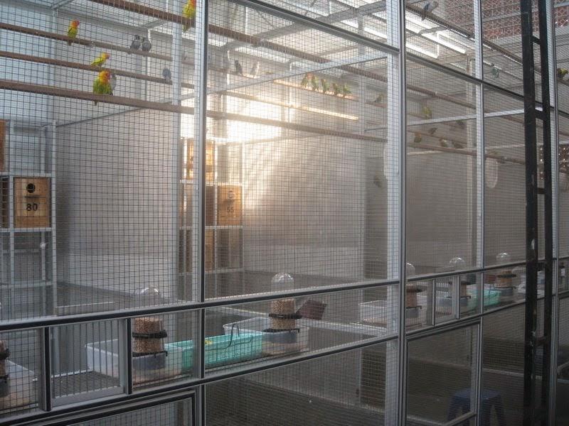 daftar peternak dan penangkaran lovebird di indonesia