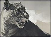 Draw a Puma