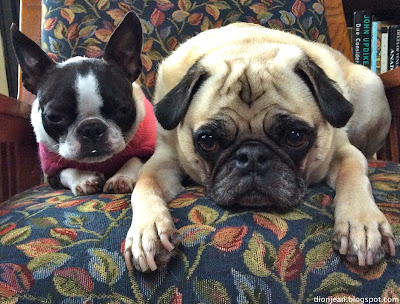 Both dogs look totally exhausted