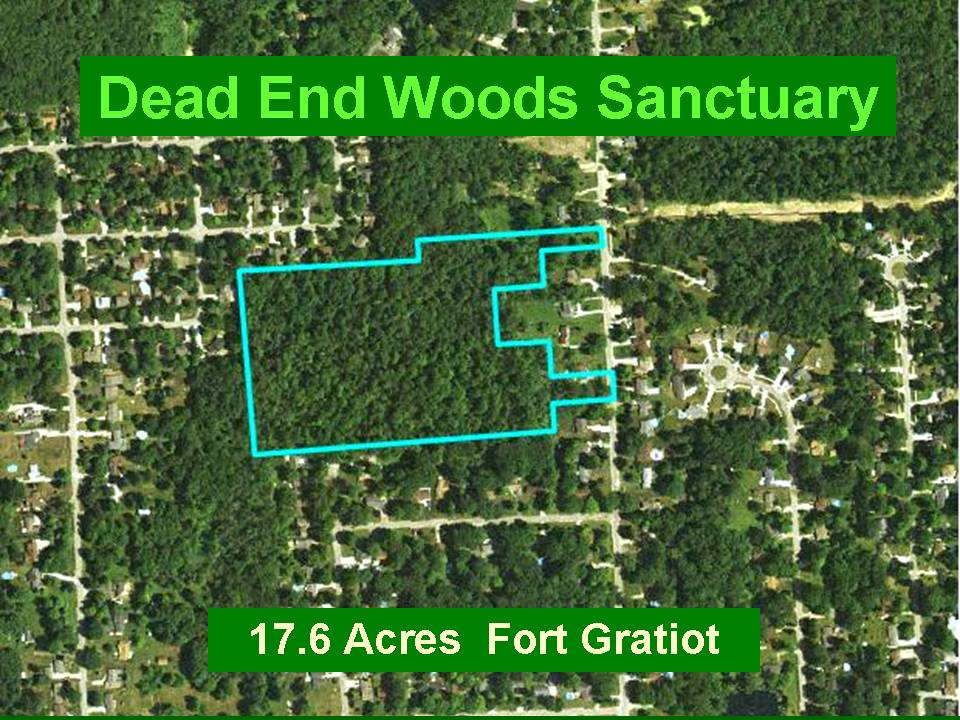 Dead End Woods Sanctuary