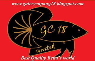 Gallery Cupang18 United