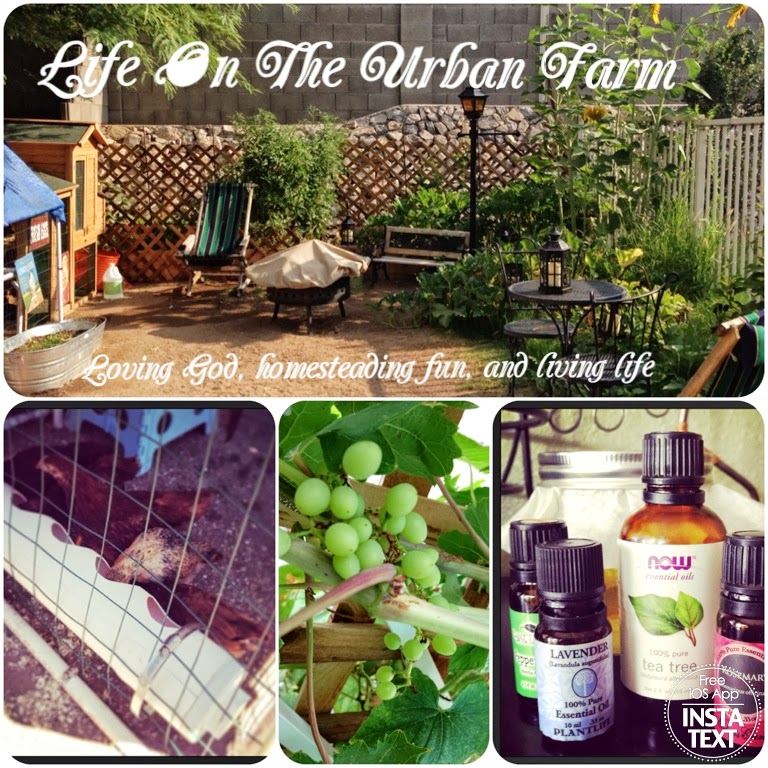 Life On The Urban Farm