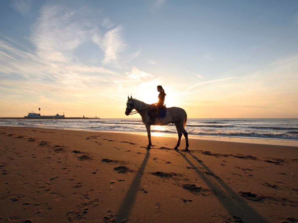 """<img src=""""http://4.bp.blogspot.com/-5pKY-8lwJ2w/UtkT5Ue_htI/AAAAAAAAIeo/OgKz-XIxmlQ/s1600/animal-wallpapers-riding-on-a-beach.jpeg"""" alt=""""riding horse on a beach"""" />"""