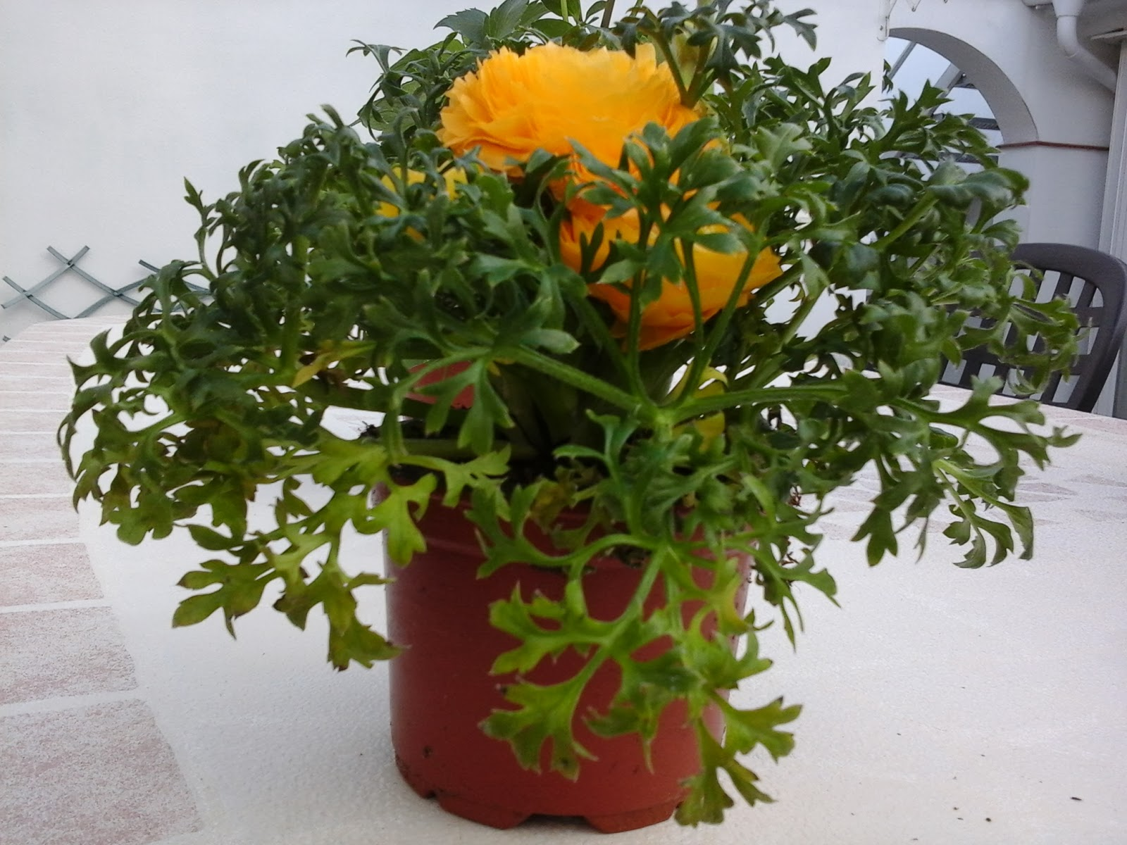 Flores para primavera y verano for Plantas de exterior sin sol