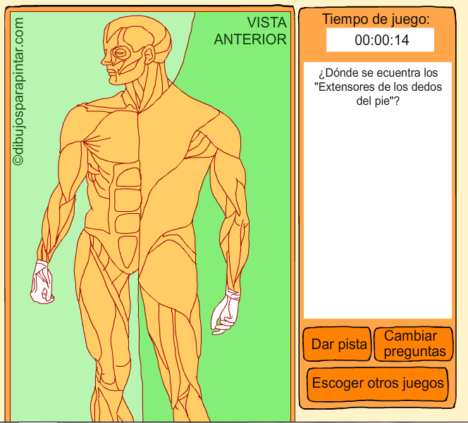 http://www.dibujosparapintar.com/juegos_ed_nat_musculos.html