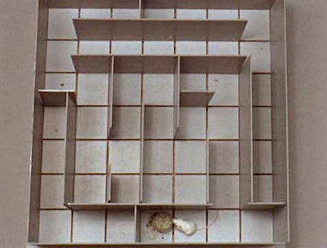 El laberinto de Algernon en la película Charly - Cine de Escritor