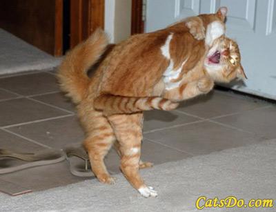 Images de chatons rigolos - Images de chats rigolos ...