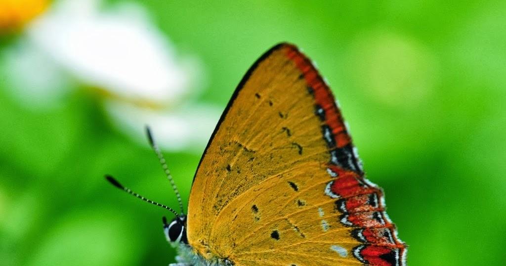 фото обои бабочка