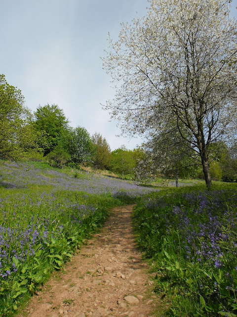 Bluebells, Clent, Worcestershire