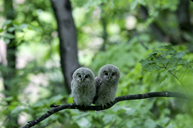 All photos gallery: Cute animal happy life, cute animal