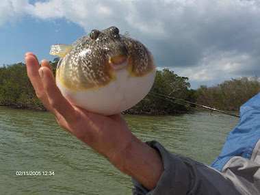 smooth puffer fish