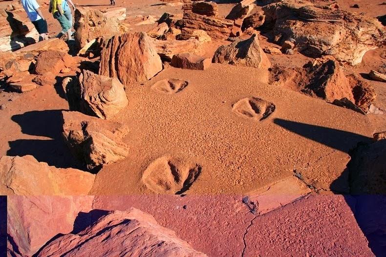 آثار أقدام الديناصورات على قوالب الجبس عند نقطة جانثيوم فى مدينة بروم باستراليا