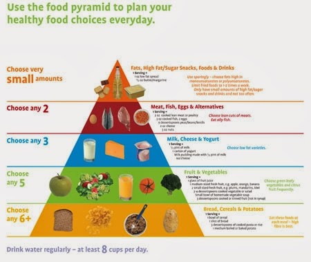 Blank Food Guide Pyramid Anatomy Picture Reference And