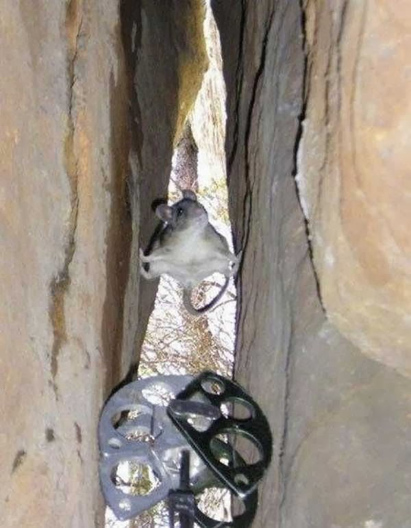 Funny animals of the week - 10 January 2014 (35 pics), mouse stands between cliff
