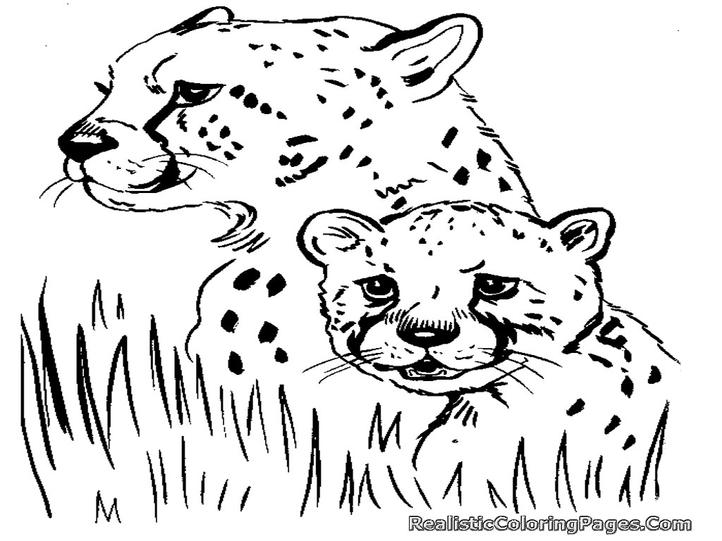 Free Coloring Pages Of Cheetah | Realistic Coloring Pages