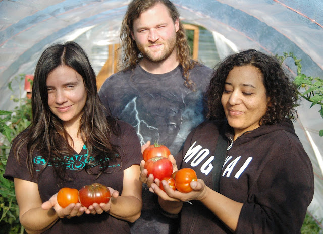 Helms Alee tomatoes farm to artist