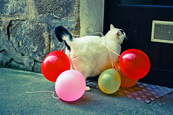 cat with balloons, funny cat pictures, funny cats