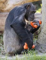 Os Monkeys Também