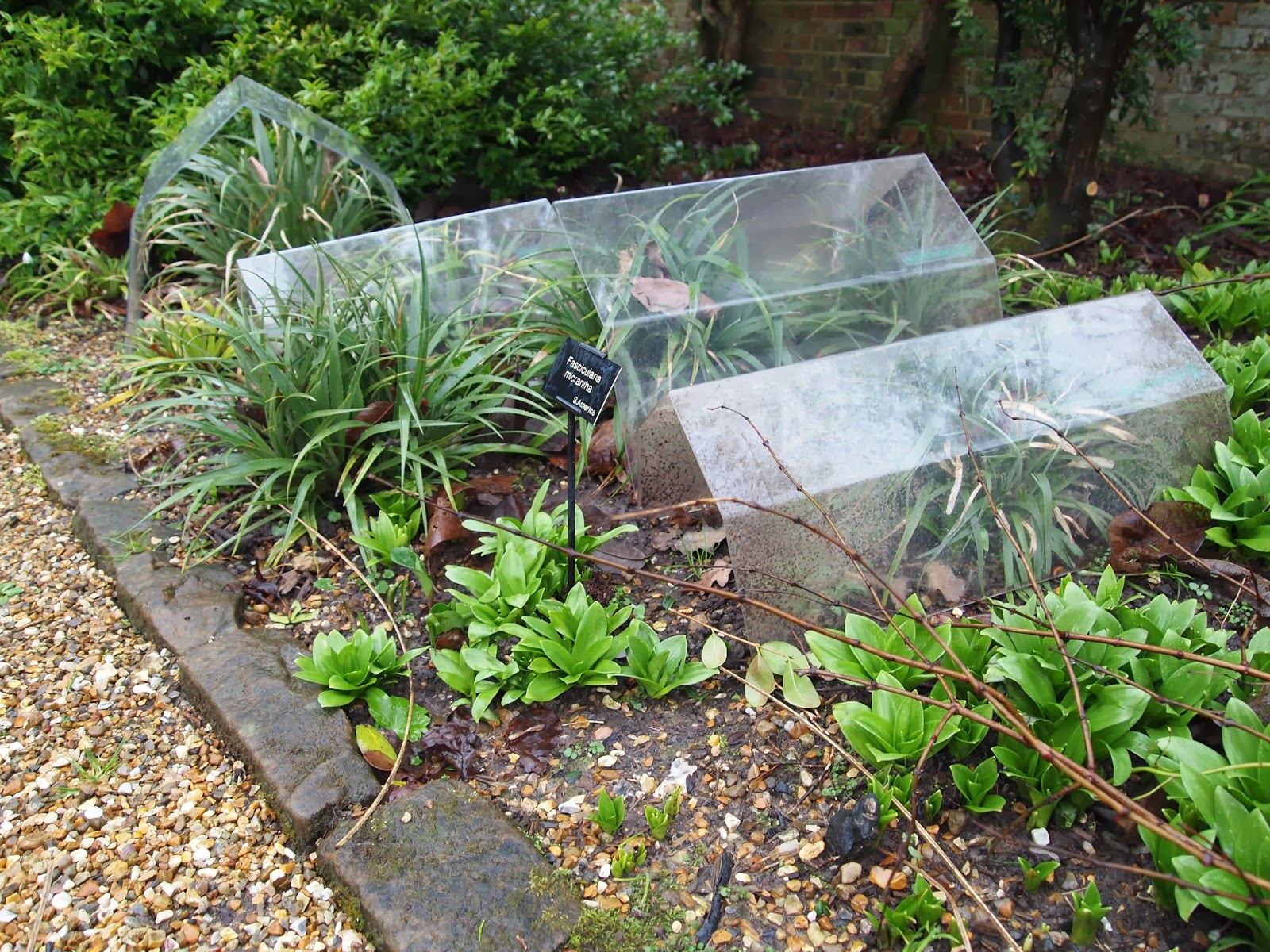 Protecting tender plants in winter