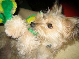 buddy playing with his frog toy