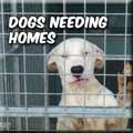 DOGS NEEDING HOMES