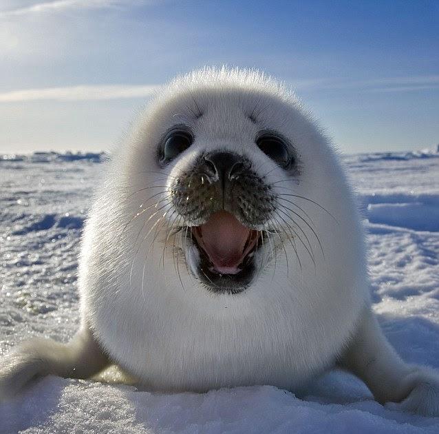 Wahyudi Blog Melihat Langsung Senyuman Laut Dan Tingkah Lucu