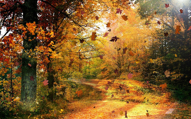 Autumn Wind7