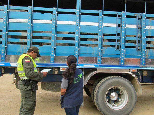 Desarticulada estructura delincuencial dedicada al contrabando de bovinos en Norte de Santander