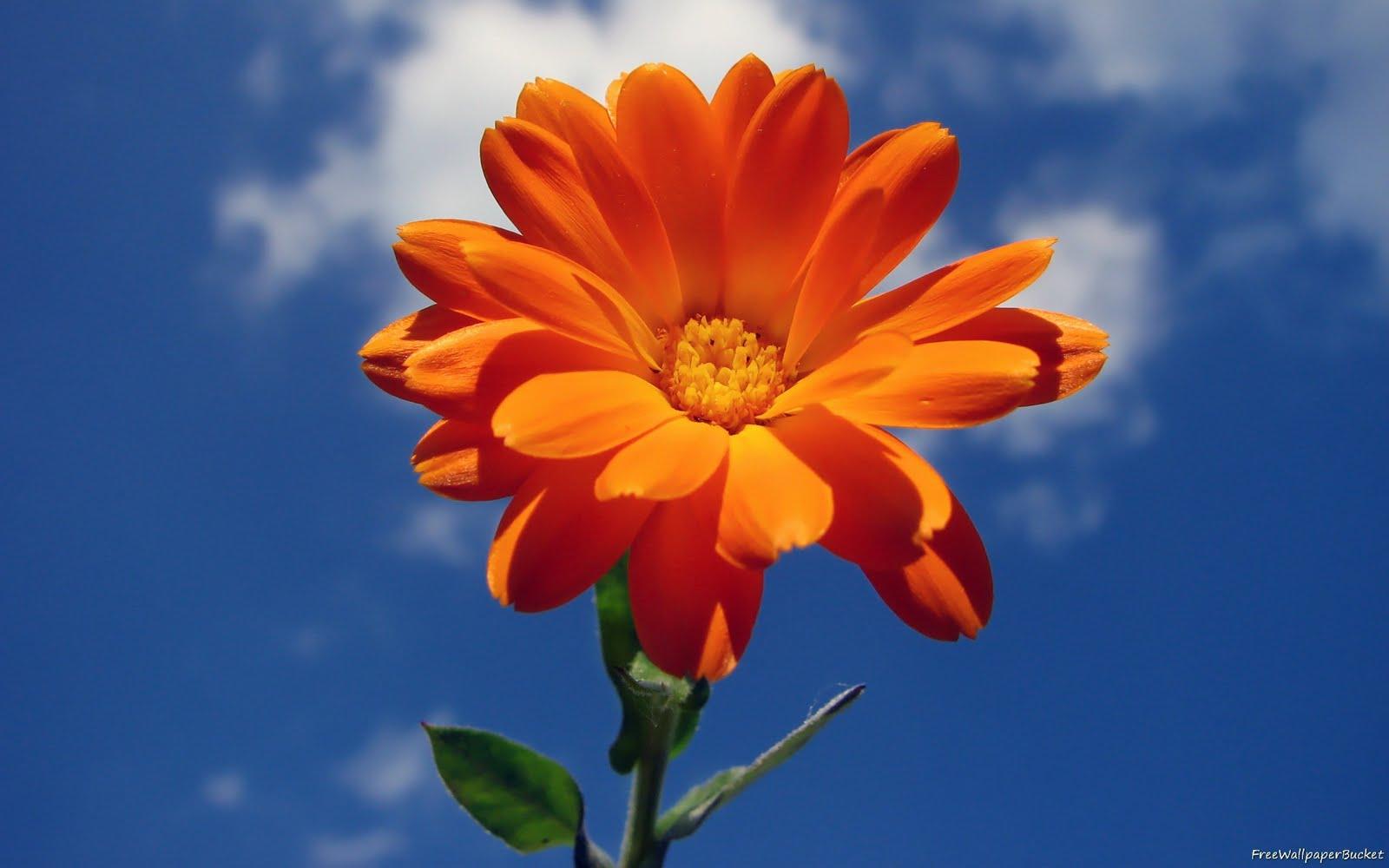 http://4.bp.blogspot.com/-5tZbJIF-Fpo/TbP0DOi2RXI/AAAAAAAAB6U/exh4wtP2ZmA/s1600/Flowers-Flower-Sky-Cloud-wallpapers00002.jpg