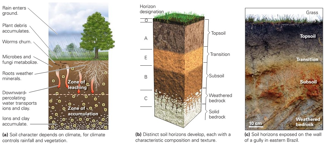 Soil learning geology for What are soil minerals