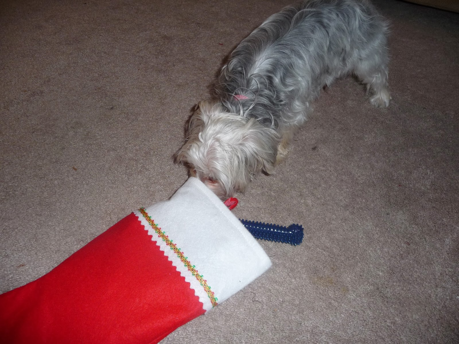 Morkie Madness: Christmas Gift Ideas for Your Dog