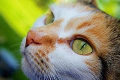 Katze Leila