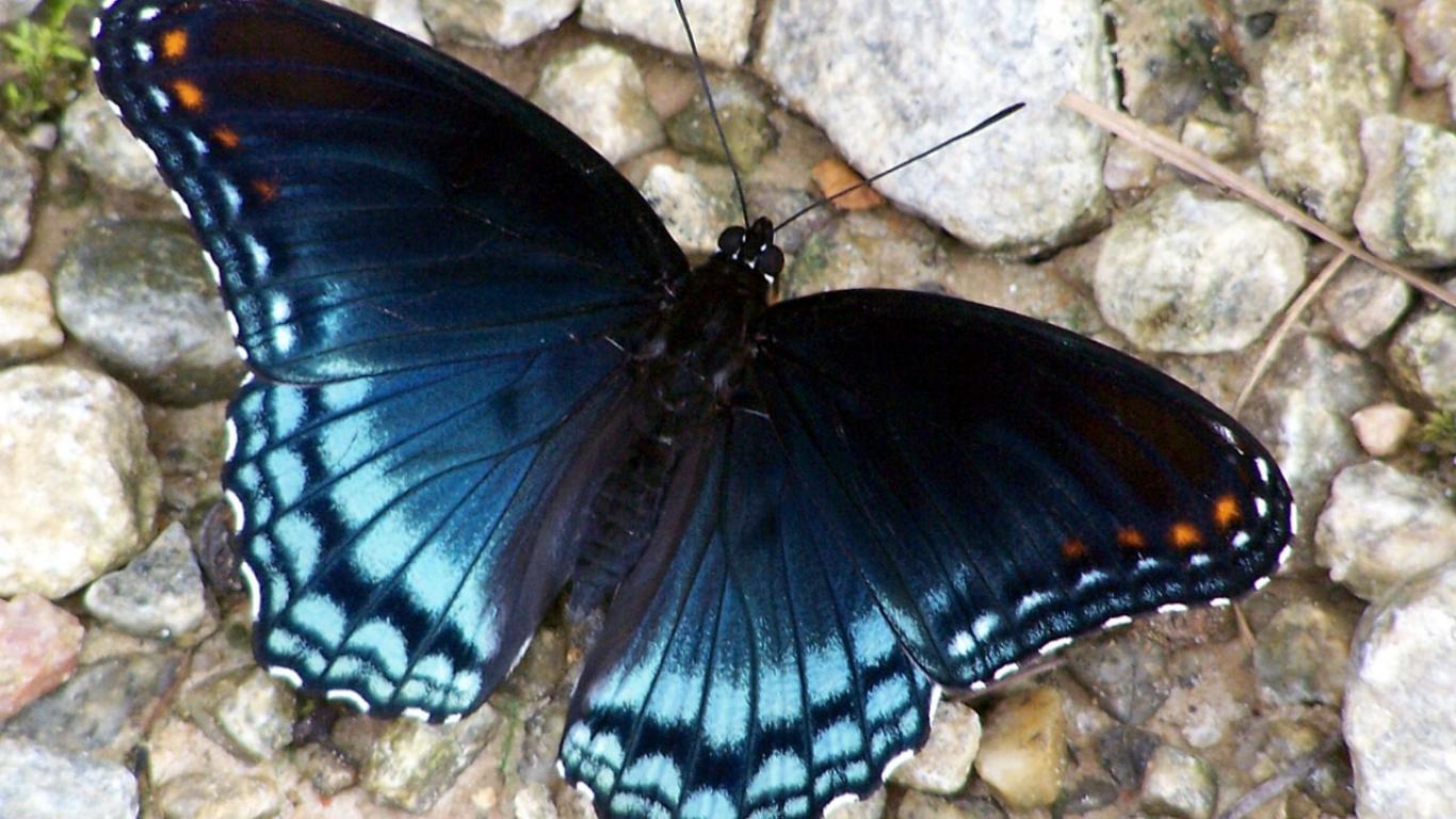 Farklı açılardan çekilmiş en güzel kelebek fotoğrafları