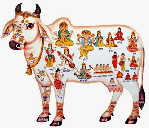 Holy Cow - Shri Krishna love her
