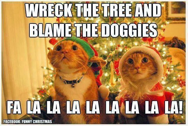 Funny Christmas Meme Pics : Cute and funny pictures what christmas is like