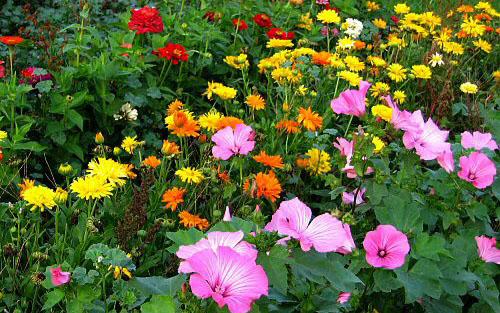 How to Create Beautiful Garden