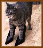 =^.^= Clique no Gato e visite o Blog Gato de Sapato