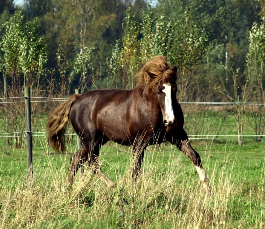 Hargo Talu und die Alt-Tori Pferde