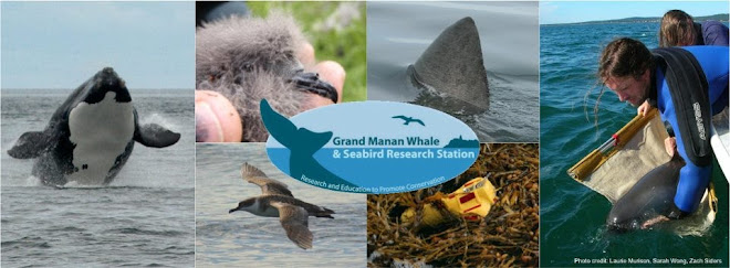 Grand Manan Whale & Seabird Research Station