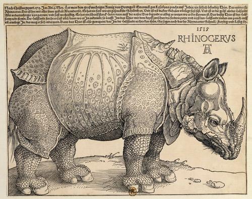 Rhinocéros (1515) by Albrecht DURER (1471-1528)