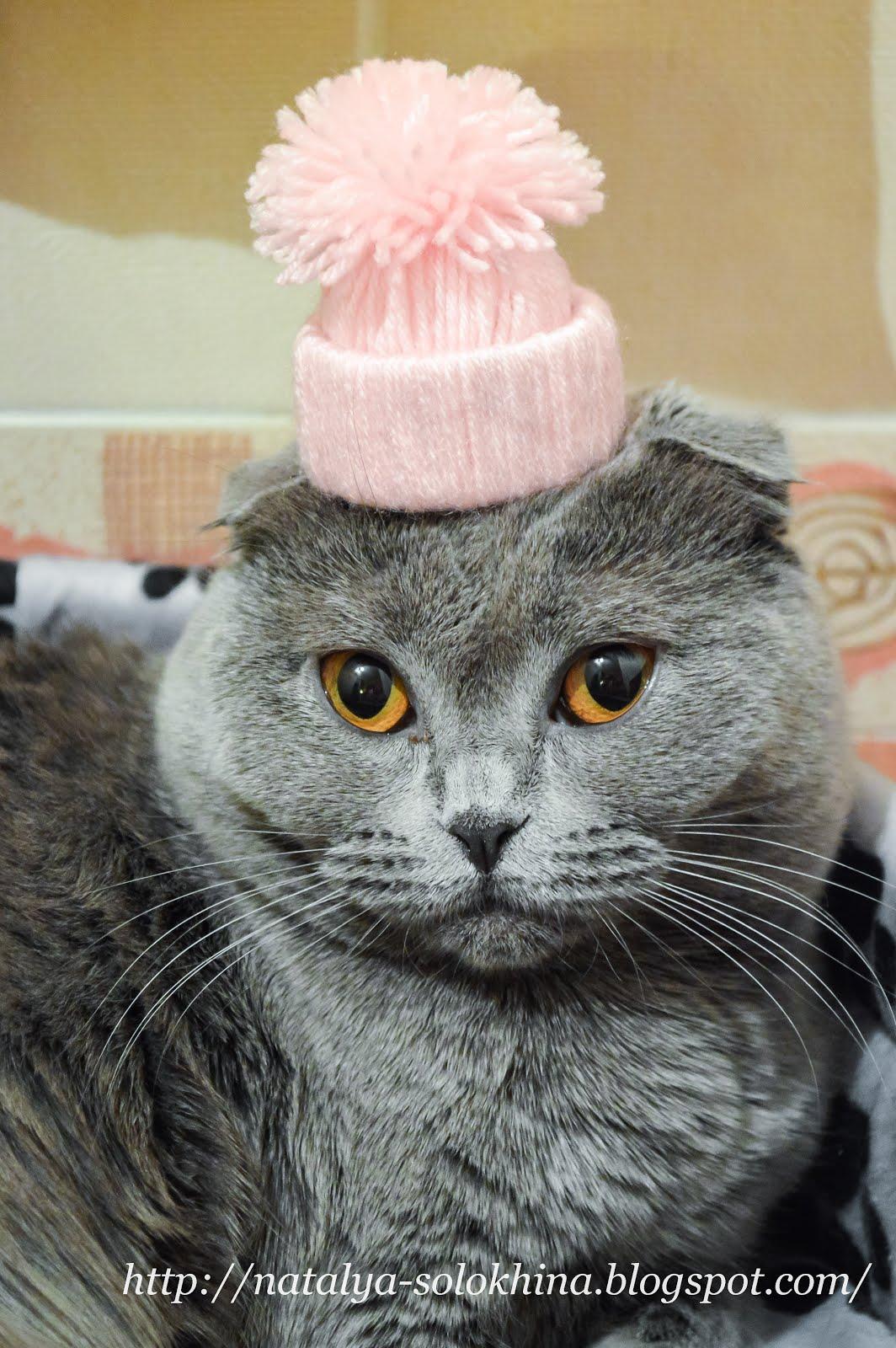Котик месяца ФЕВРАЛЬ