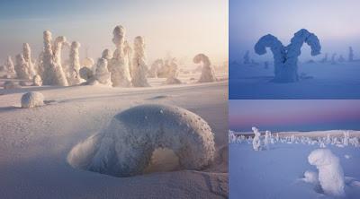 Pohon Salju Unik di Antartika