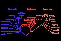 Klasifikasi sistem filogenetik yaitu