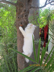 "Traditional persian cat on  a tree at ""Rann Riders"" resort."