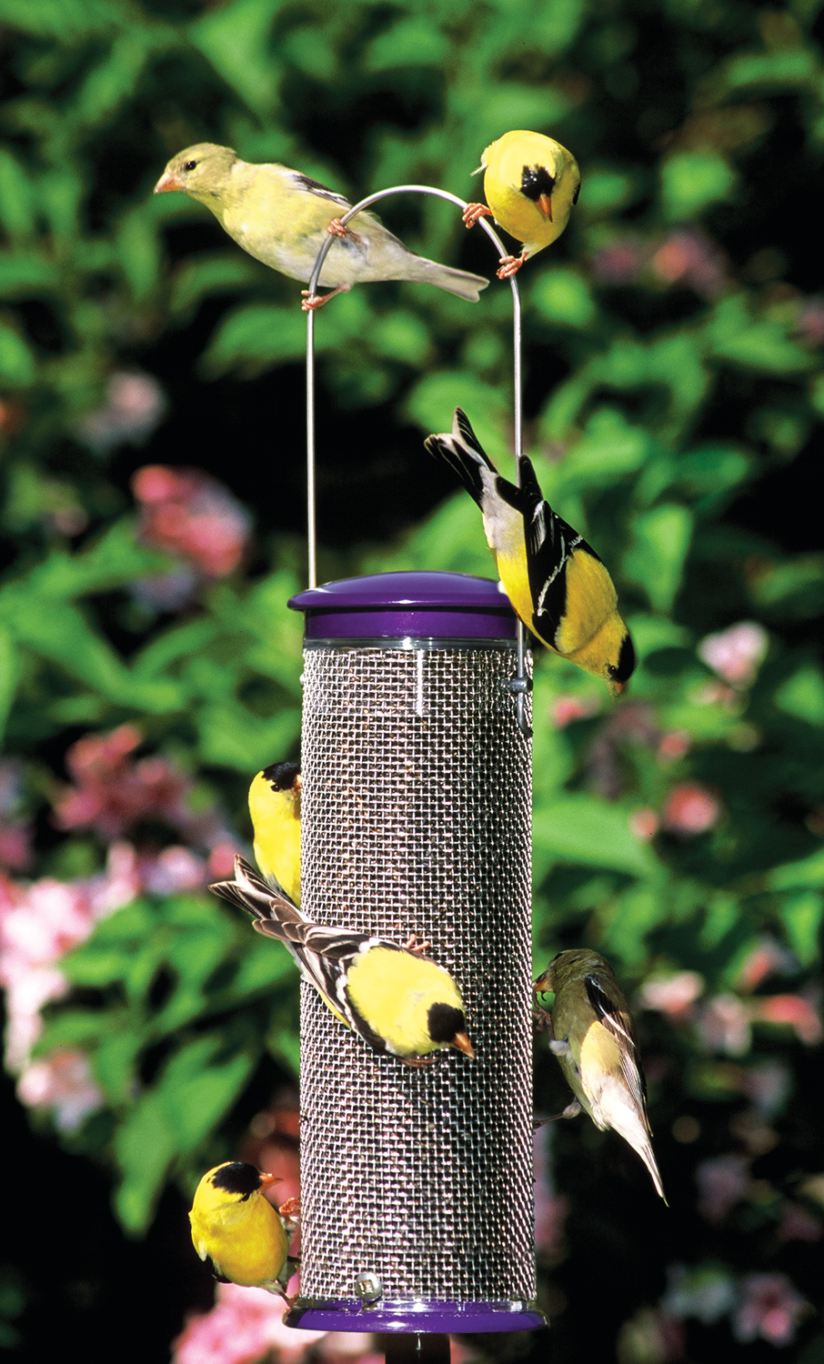 wild birds unlimited why won u0027t the finches come to my feeder