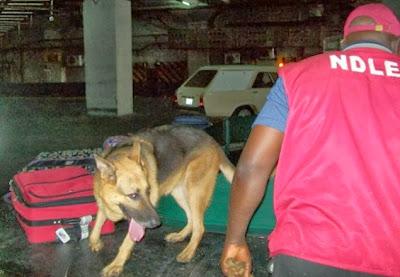 drug dealers arrested kebbi state